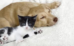 dog cat_211968355